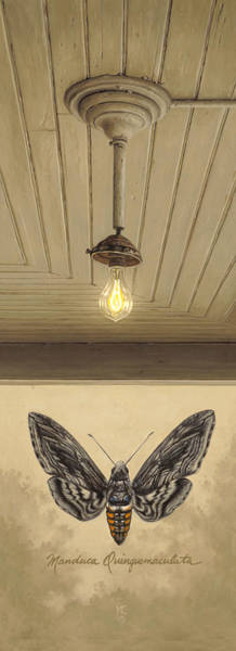 Butterfly Wall Art - Painting - Toward The Light by Ron Crabb