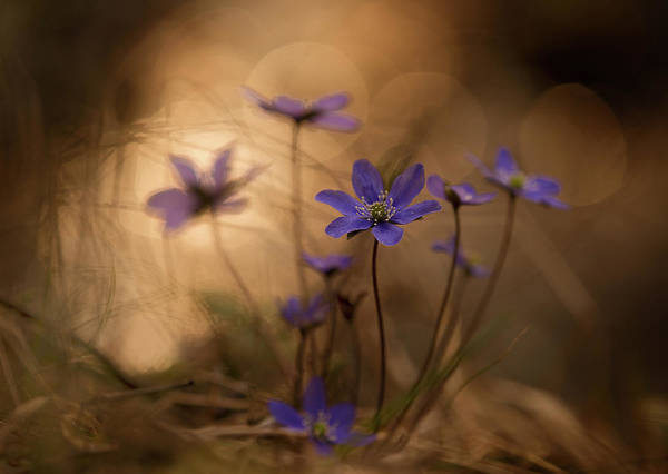 Fall Flowers Photograph - Towards Evening by Michel Manzoni