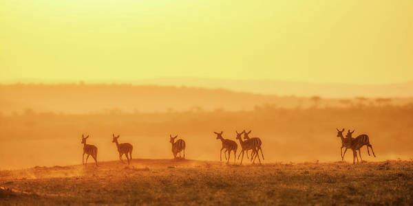 Antelope Wall Art - Photograph - Towards Sunset by John Fan
