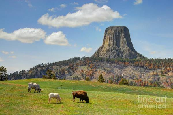 Photograph - Tower Grazers by Anthony Wilkening