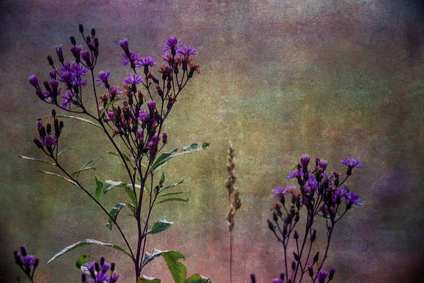 Wall Art - Photograph - Towering Above The Meadows by Dale Kincaid