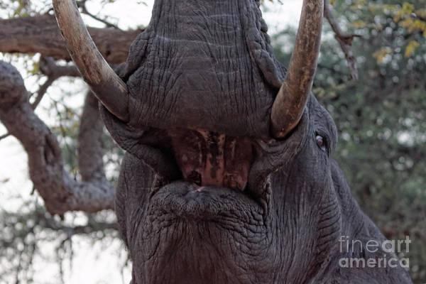 Photograph - Towering Beast by Mareko Marciniak