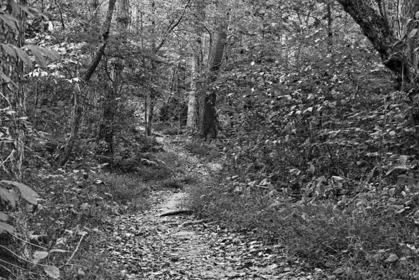 Photograph - Townsend Park Lan218 by G L Sarti