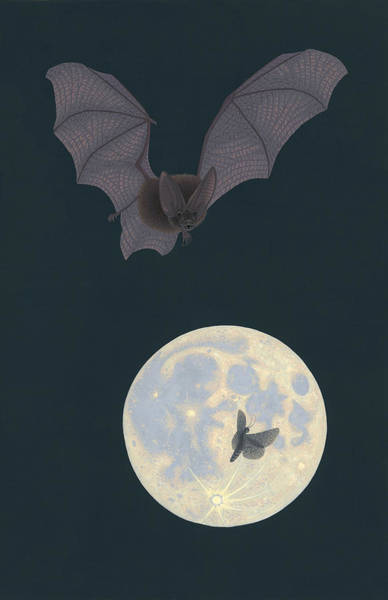 Wall Art - Painting - Townsend's Big-eared Bat by Nathan Marcy