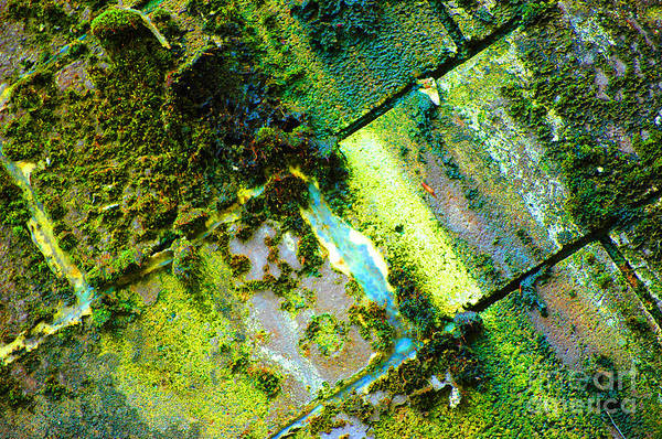 Darkside Photograph - Toxic Moss by Christiane Hellner-OBrien