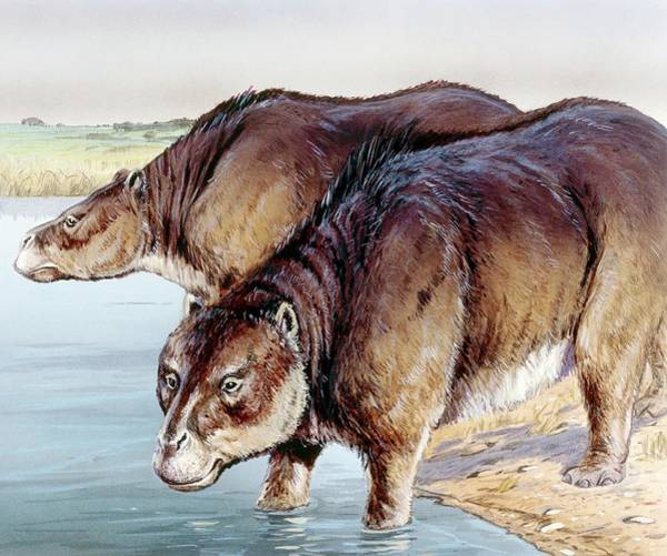 Wall Art - Photograph - Toxodon by Michael Long/science Photo Library
