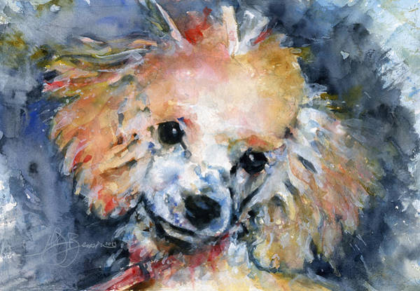 Poodle Wall Art - Painting - Toy Poodle by John D Benson