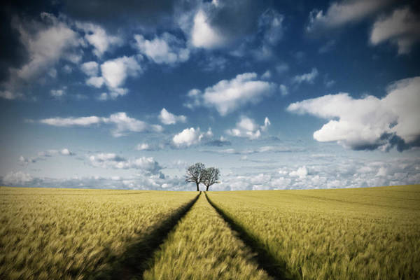 Way Wall Art - Photograph - Trace & Trees 2 by Carsten Meyerdierks