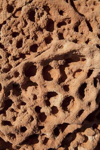 Broome Photograph - Trace Fossils, Gantheaume Point by Science Photo Library