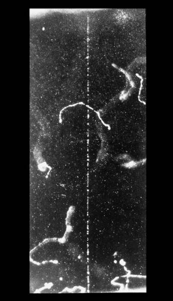 Imagery Photograph - Track Of Fast Beta Ray In Cloud Chamber by C.t.r. Wilson/science Photo Library