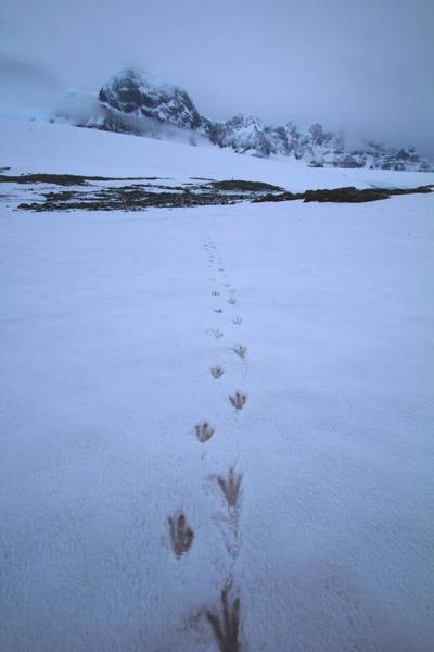 Wall Art - Photograph - Tracks In The Snow by FireFlux Studios
