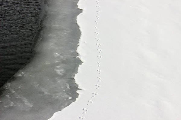 Photograph - Tracks In The Snow by Pete Hendley