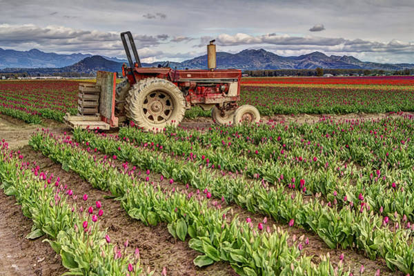 Photograph - Tractor And Tulips by Mark Kiver