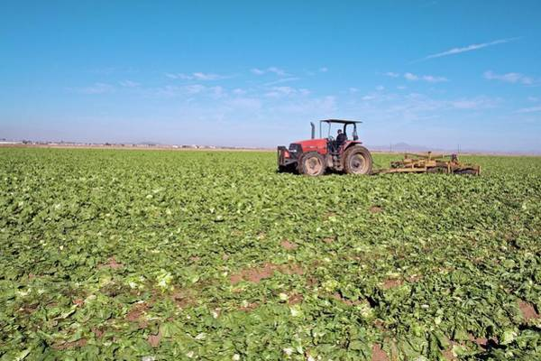 Yuma Photograph - Tractor Clearing A Field by Jim West