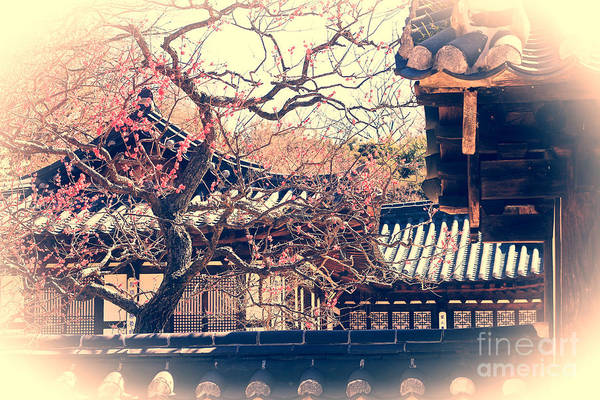 Photograph - Traditional Korean House With Pink Plum Blossoms by Beverly Claire Kaiya