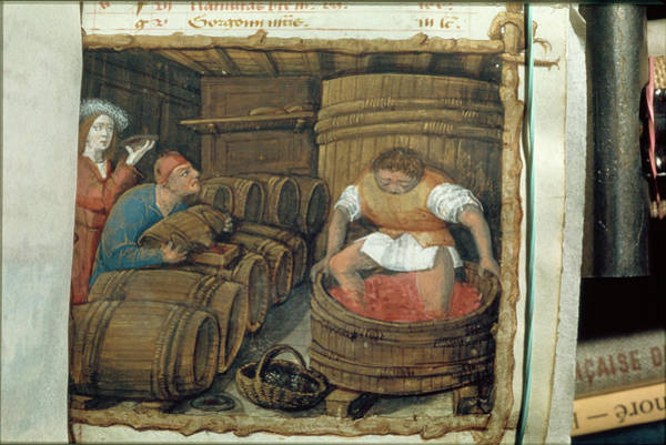 Wall Art - Photograph - Traditional Winemaking by Jean-loup Charmet/science Photo Library