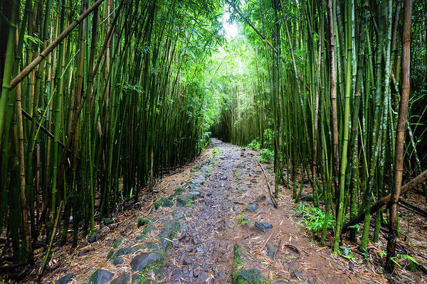 Bamboo Photograph - Trail In A Forest, Pipiwai Trail by Panoramic Images