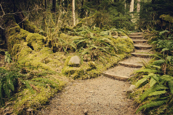 Photograph - Trail Through The Moss by Heather Applegate