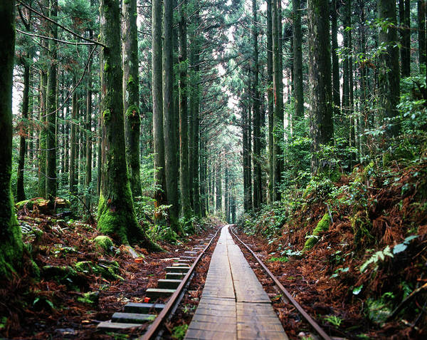 Snapping Wall Art - Photograph - Train Tracks In The Forest by Andrew Yuen