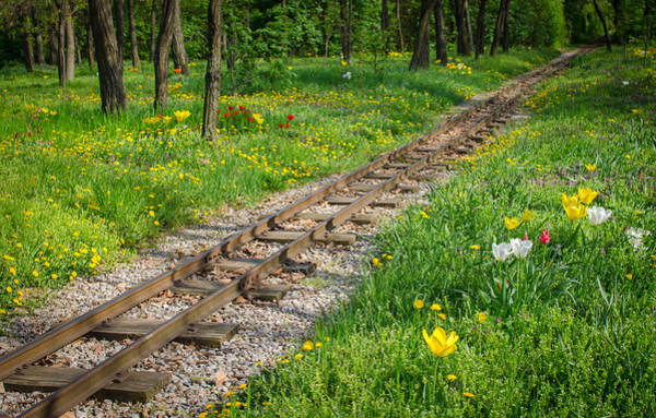 Straight Ahead Wall Art - Photograph - Train Tracks Through Mystic Flower Forest by Andreas Berthold