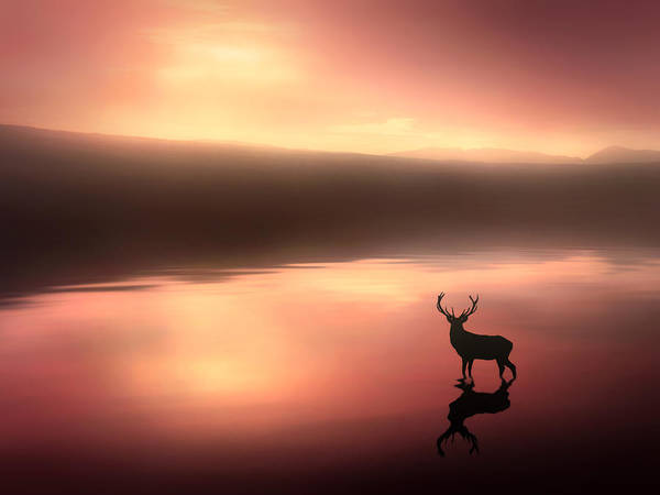 Tranquil Dawn Art Print by Jennifer Woodward