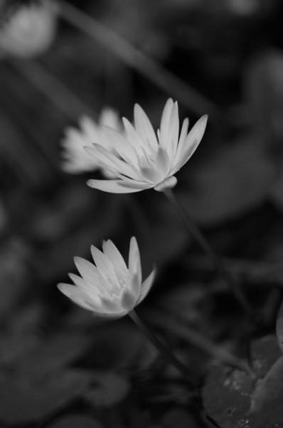 Photograph - Tranquil Gardens by Miguel Winterpacht