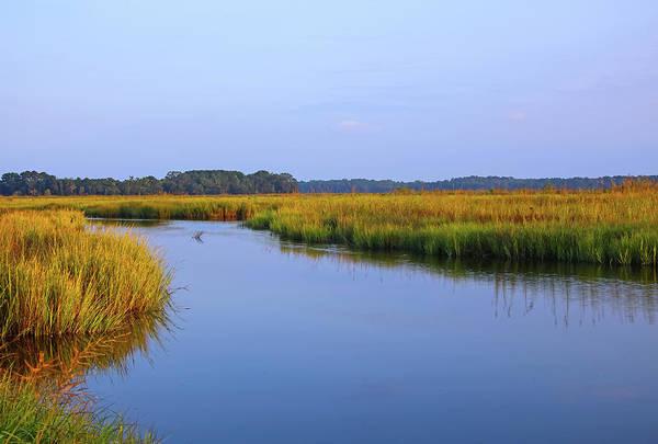 Marsh Grass Photograph - Tranquil Marsh by Daniela Duncan