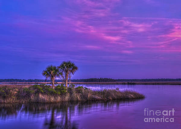 Coastal Marshes Photograph - Tranquil Palms by Marvin Spates