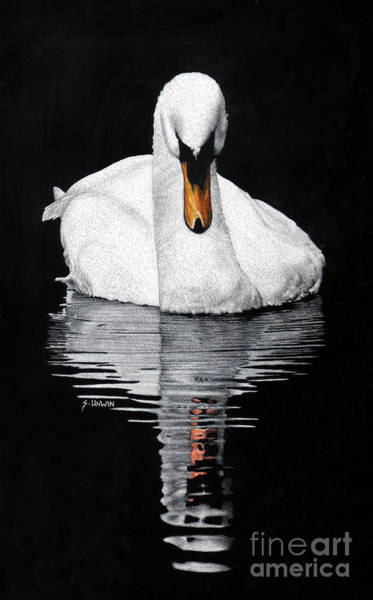 Scratchboard Drawing - Tranquil Reflection by Sheryl Unwin