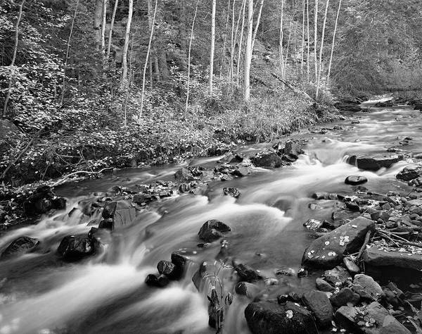 Photograph - Tranquility - Black And White by Harold Rau