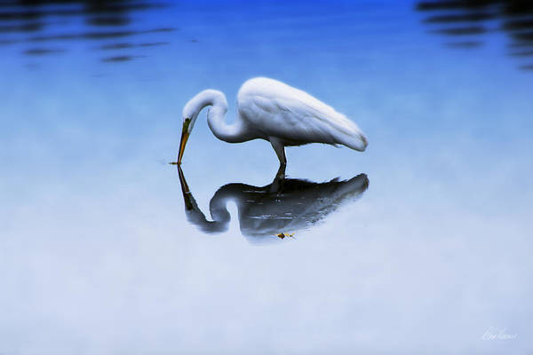 Photograph - Tranquility by Diana Haronis