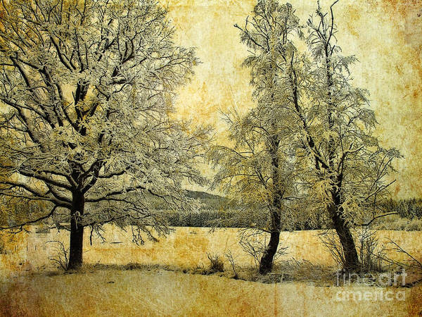 Photograph - Tranquility Of The Cold by Edmund Nagele