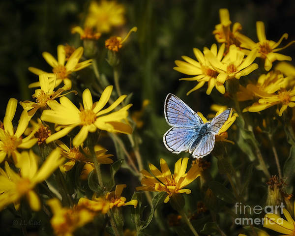 Aster Photograph - Transformation by Medicine Tree Studios