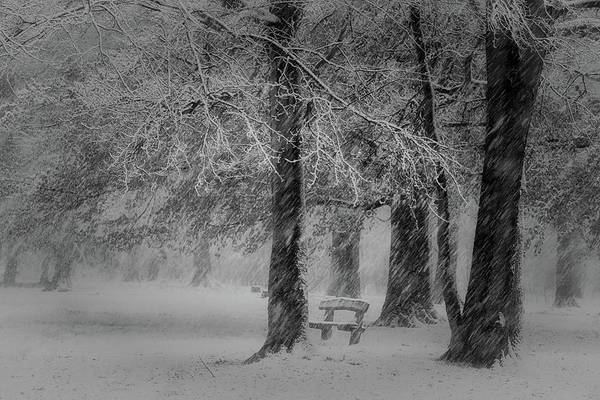 Park Bench Photograph - Transformation by Saskia Dingemans