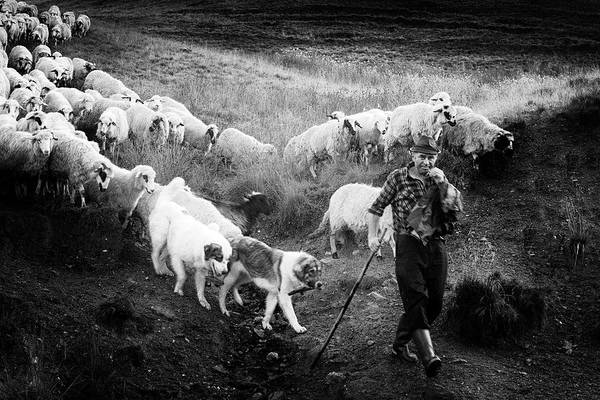 Wall Art - Photograph - Transhumance by Sebastian Vasiu |
