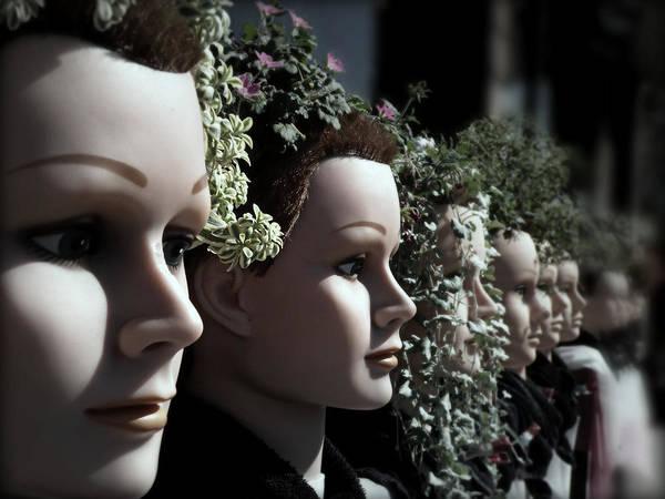 Photograph - Transplants by Micki Findlay