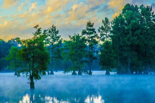 Bald Cypress Digital Art - Trap Pond 3 by Darlene Freas
