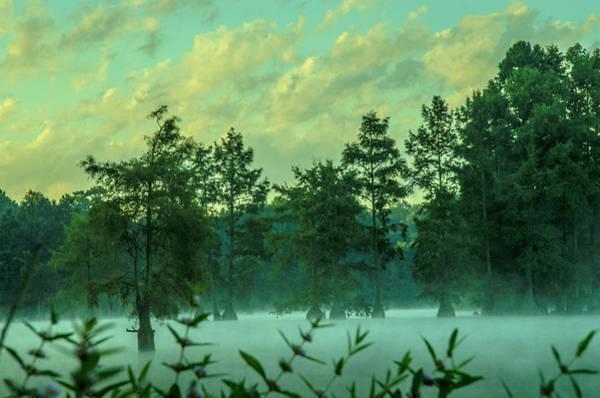 Bald Cypress Digital Art - Trap Pond 4 by Darlene Freas