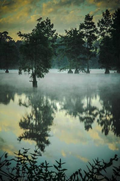 Bald Cypress Digital Art - Trap Pond 5 by Darlene Freas