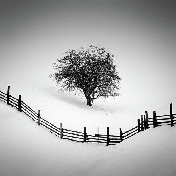Minimalistic Photograph - Trapped by Martin Rak