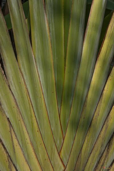 Photograph - Traveller's Palm Patterns Dthb1542 by Gerry Gantt