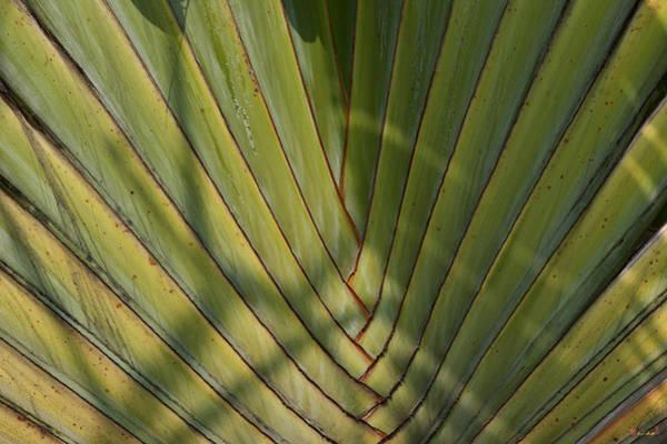 Photograph - Traveller's Palm Patterns Dthb1543 by Gerry Gantt