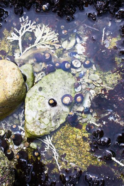 Photograph - Treasures In The Tidepool by Priya Ghose