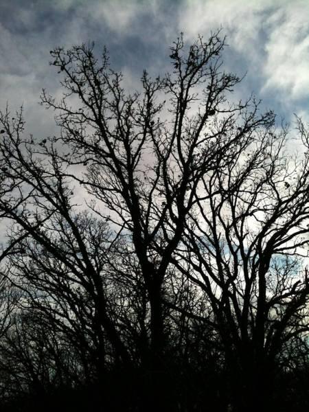 Digital Art - Tree 111217-1437 by Jeff Iverson
