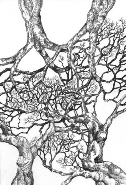 Digital Art - Tree 18 by Brian Kirchner