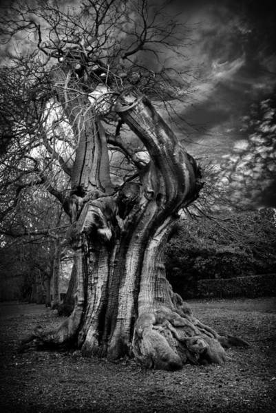 Wall Art - Photograph - Tree 2 by Mark Rogan