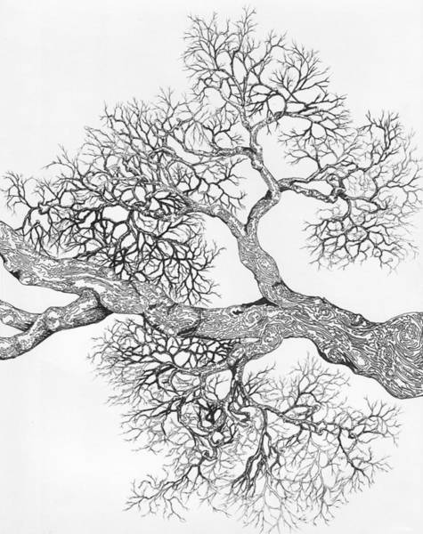 Digital Art - Tree 8 by Brian Kirchner