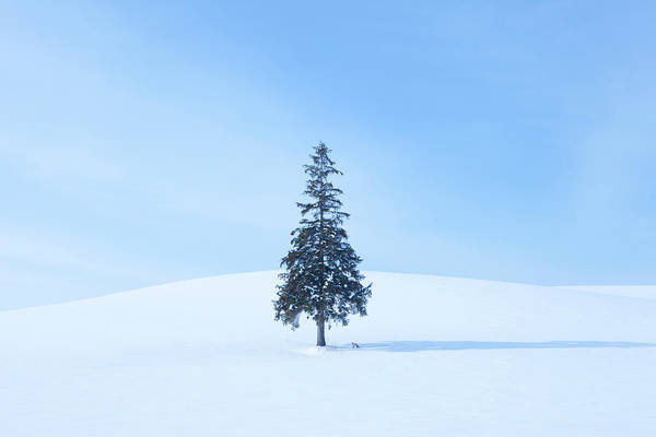 Snowfield Photograph - Tree And A Fox In Snow Field by Ichiro