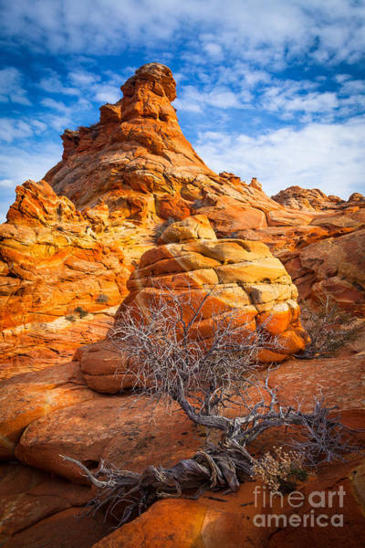 Vermilion Cliffs Wall Art - Photograph - Tree And Hoodoo by Inge Johnsson