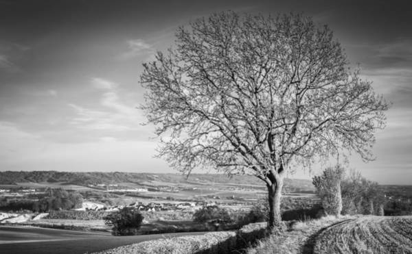 Photograph - Tree And Landscape by Gary Gillette